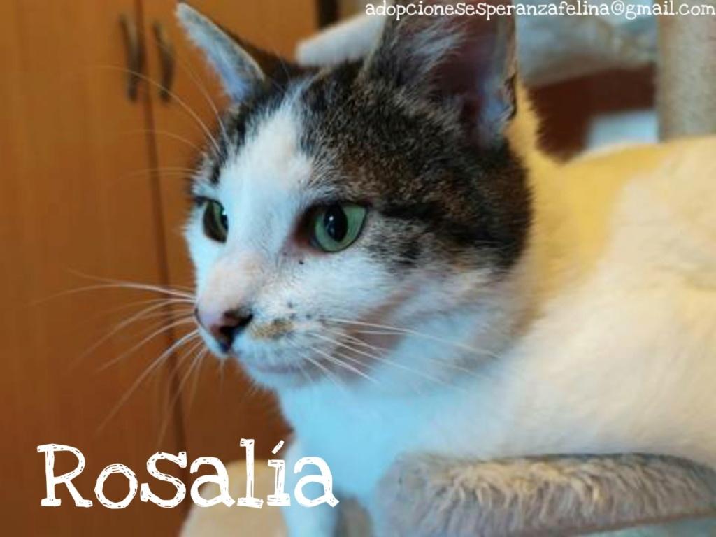 Rosalía, preciosa gatita en adopción. Álava-España (F.N: 01/2017) Picsar33