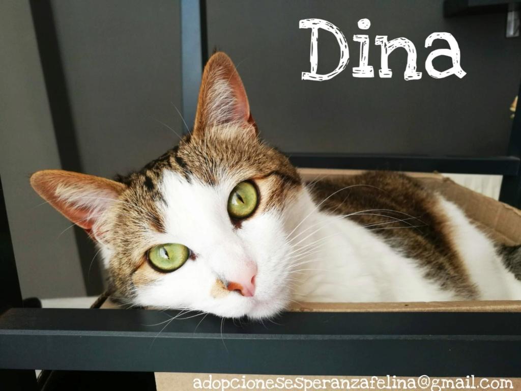Dina, preciosa gata busca su hogar (Álava, fecha de nacimiento aproximada 10/04/2014 ) - Página 2 Picsar37