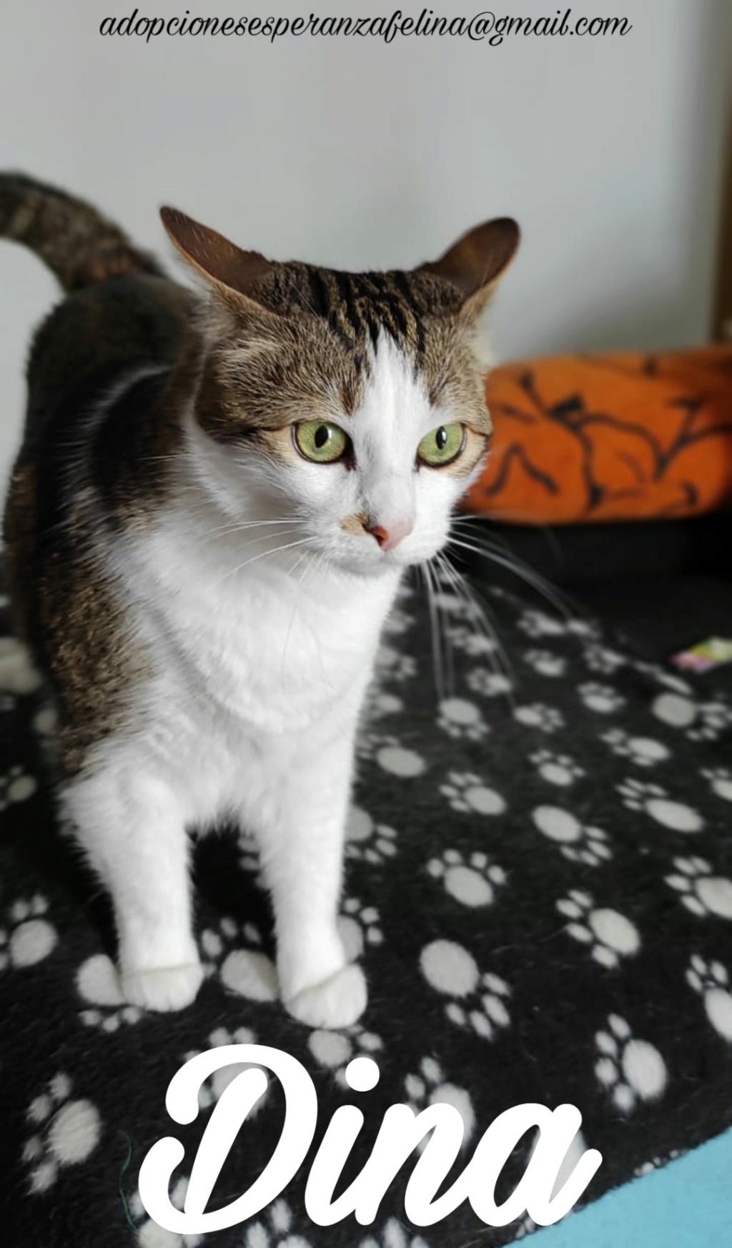 Dina, preciosa gata busca su hogar (Álava, fecha de nacimiento aproximada 10/04/2014 ) - Página 2 Picsar40