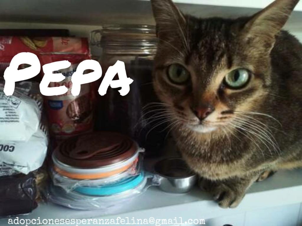 Pepa,preciosa gatita necesita hogar (f.n.aprox 28/04/13) Picsar42