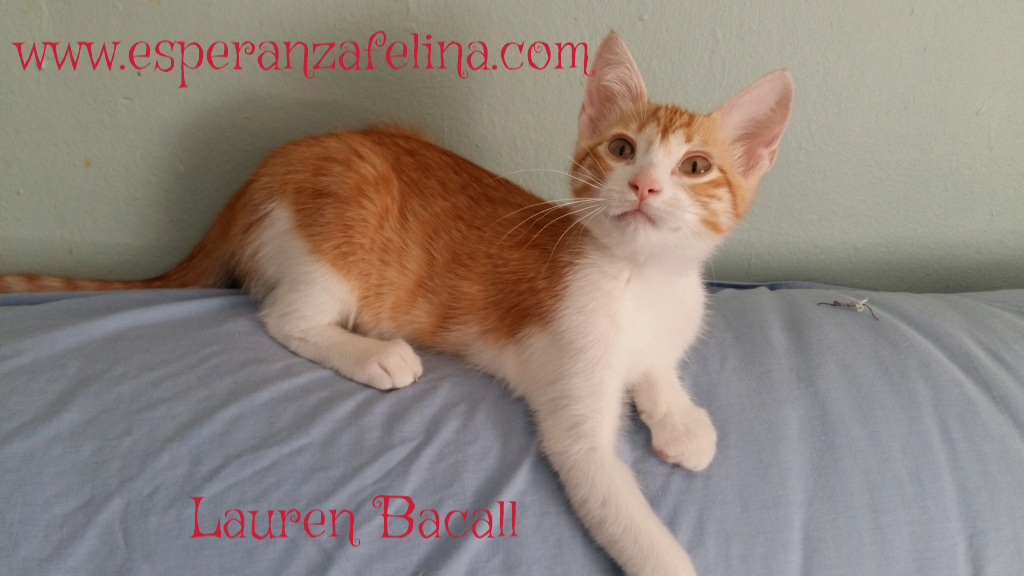 Lauren Bacall, gatita de película en adopción (Álava F.N aprox.: 23/04/18) Pictur10