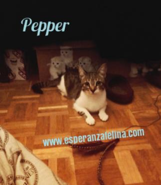 Araia y Pepper, preciosas gatitas buscan hogar. Alava (Fec. Nac. Aprox. 14/04/2018) Pictur10