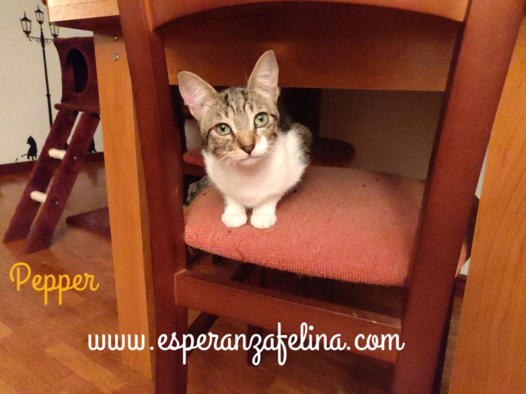 Araia y Pepper, preciosas gatitas buscan hogar. Alava (Fec. Nac. Aprox. 14/04/2018) Pictur15