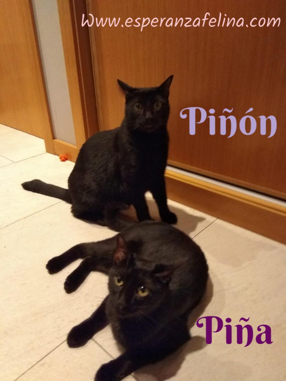 Piña y Piñón, parejita de negruchis en adopción (Alava, Fecha de nacimiento aprox.: 06/09/2017) Pictur17