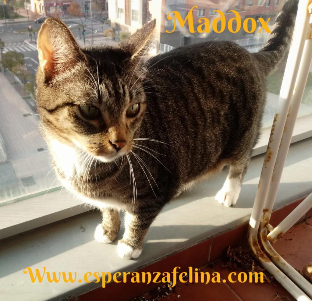 Maddox - Superviviente de la perrera en adopción (Alava, F.N 25/01/10) Pictur18