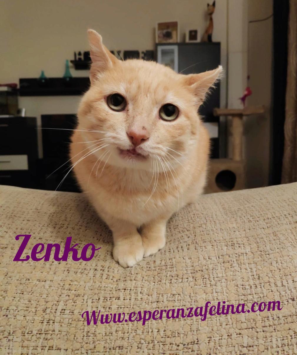 Zenko, precioso rubio en adopción. (F.N aprox: 15/01/2013) (Positivo a inmuno) Álava. Pictur20