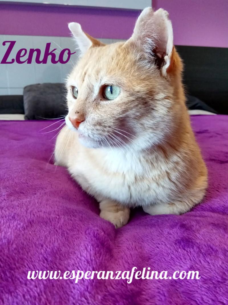 Zenko, precioso rubio en adopción. (F.N aprox: 15/01/2013) (Positivo a inmuno) Álava. Pictur24