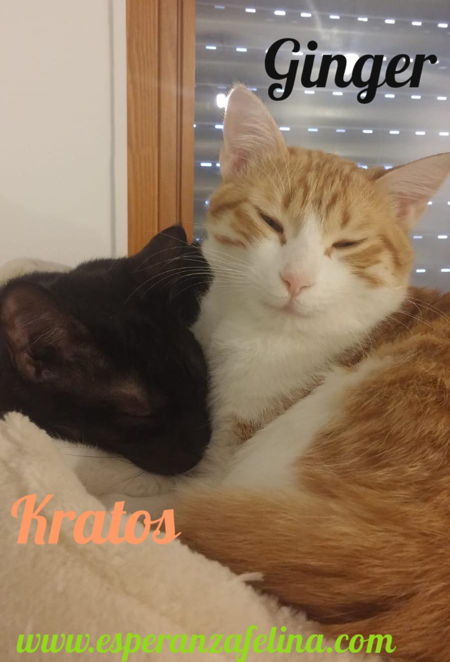 Kratos, tierna panterita en adopción  (f.n.aprox 01/05/18) Pictur27