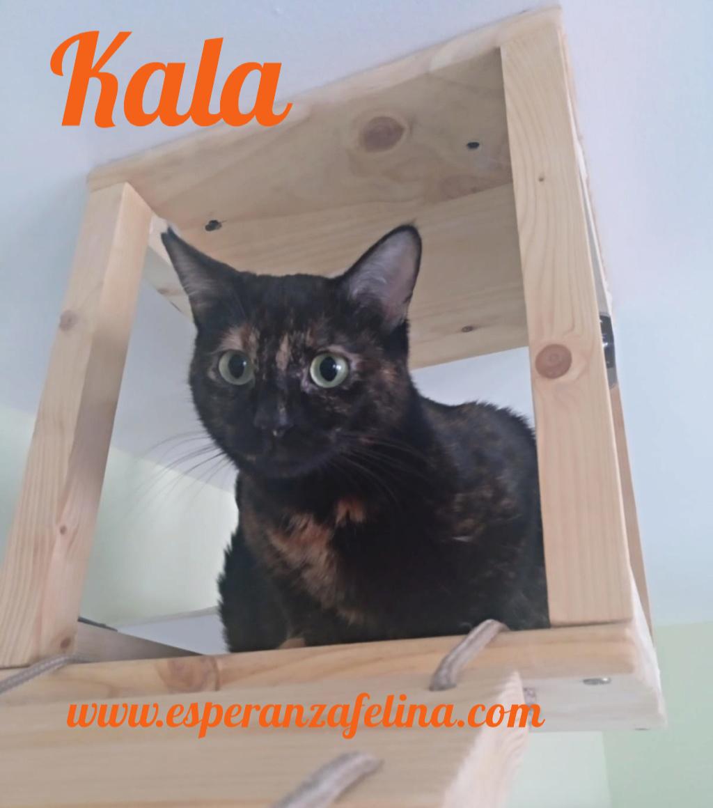 Kala, preciosa carey (Fec. Nac. Aprox. 01/01/2017) Pictur30