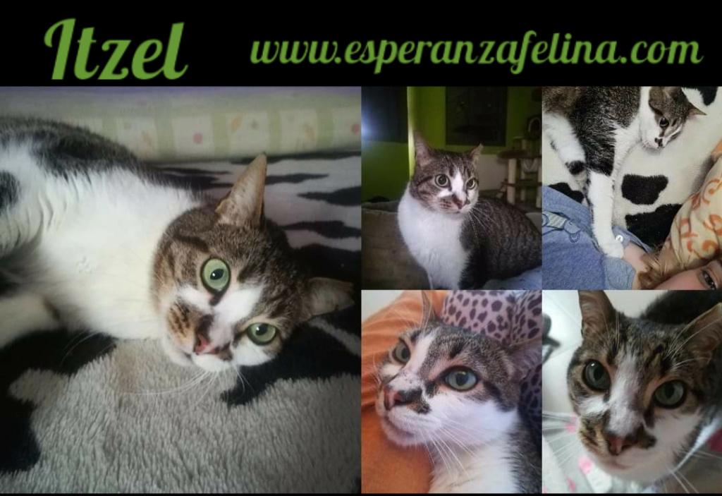 Itzel, preciosa gatita. Álava. (Fec. Nac. Aprox. 01/07/2012) Pictur31