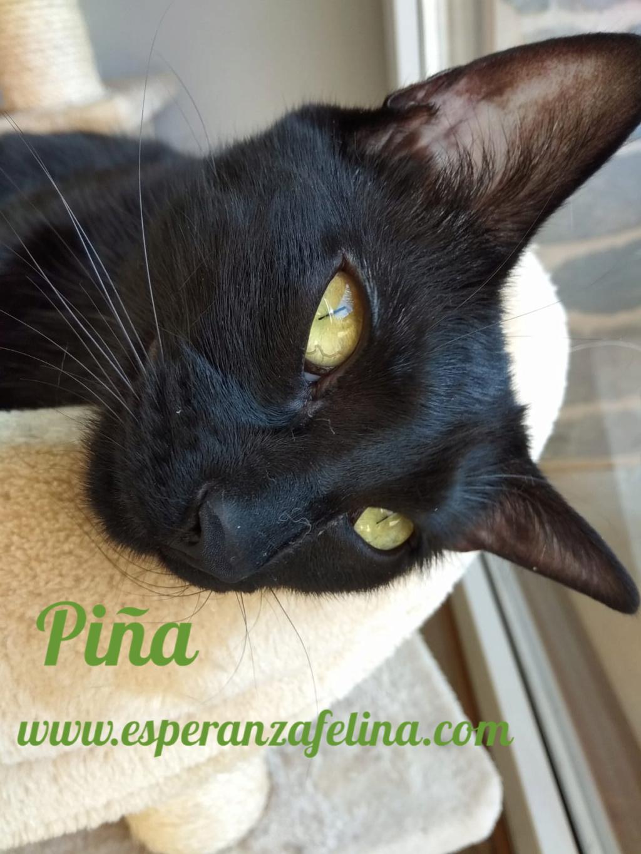 Piña y Piñón, parejita de negruchis en adopción (Alava, Fecha de nacimiento aprox.: 06/09/2017) Pictur36