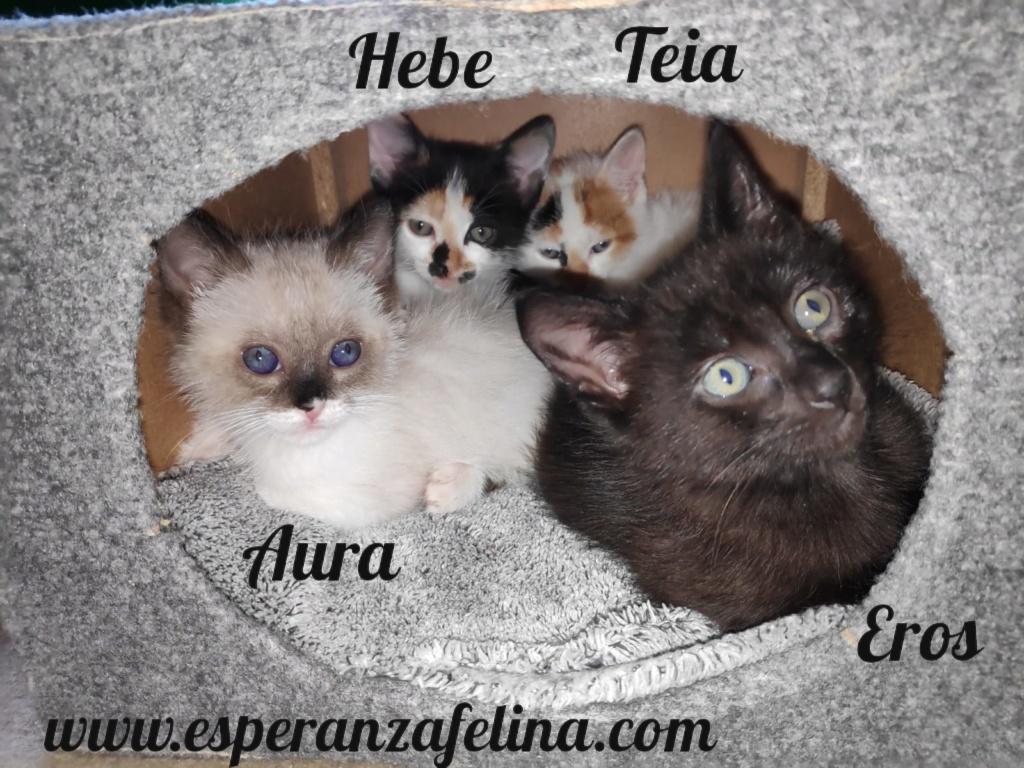 Teia y Hebe ,cachorros en adopción. Álava, España (f.n aprox 16/04/2019) Pictur39