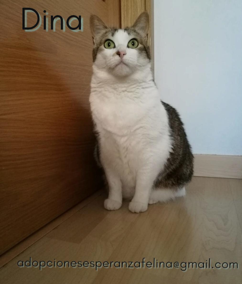 Dina, preciosa gata busca su hogar (Álava, fecha de nacimiento aproximada 10/04/2014 ) Pictur48