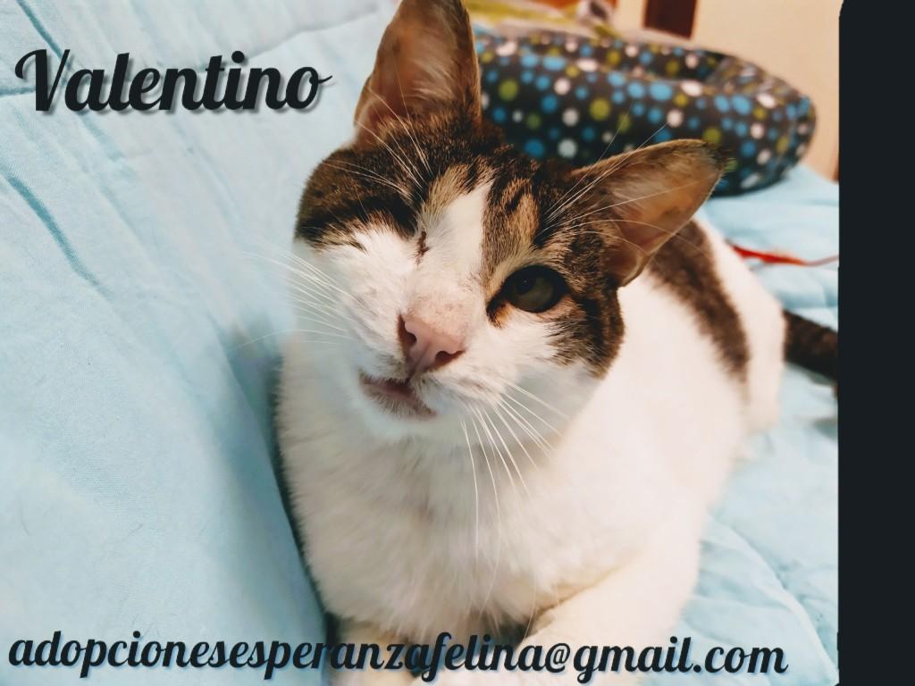 Valentino, gatito muy especial busca hogar. +INMUNO. Álava (F.N aprox. 14/11/2012) Pictur52