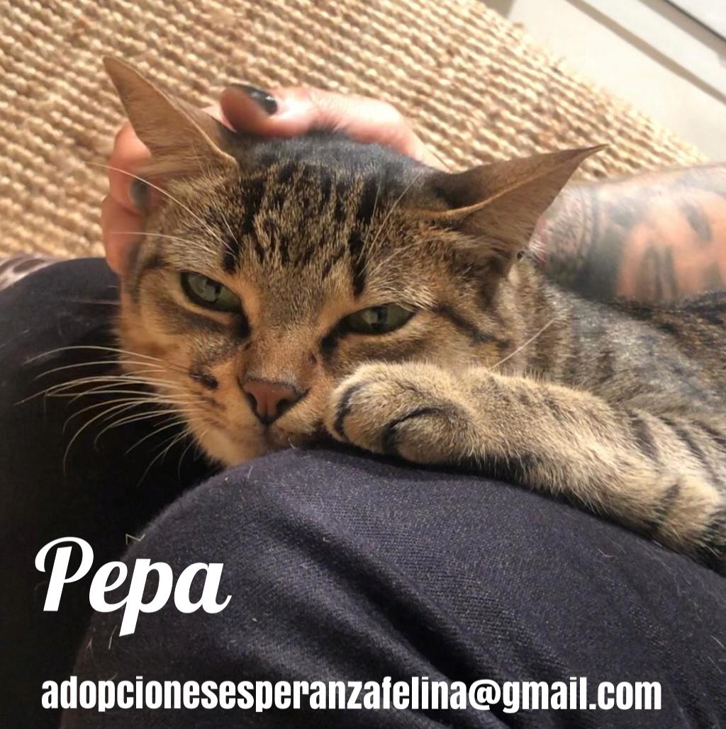 Pepa,preciosa gatita necesita hogar (f.n.aprox 28/04/13) Pictur54