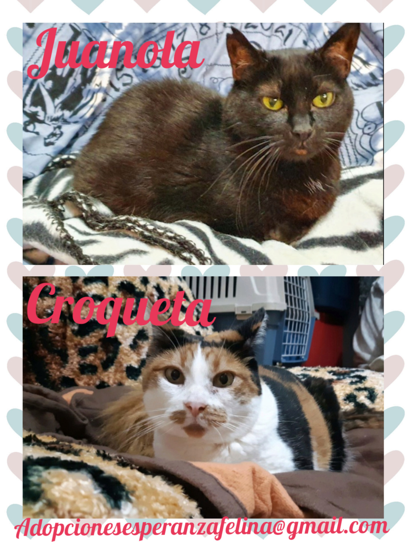 Croqueta y Juanola, preciosas abuelitas buscan hogar. Alava (FN: 02/08/2006; 14/06/2006) Pictur57