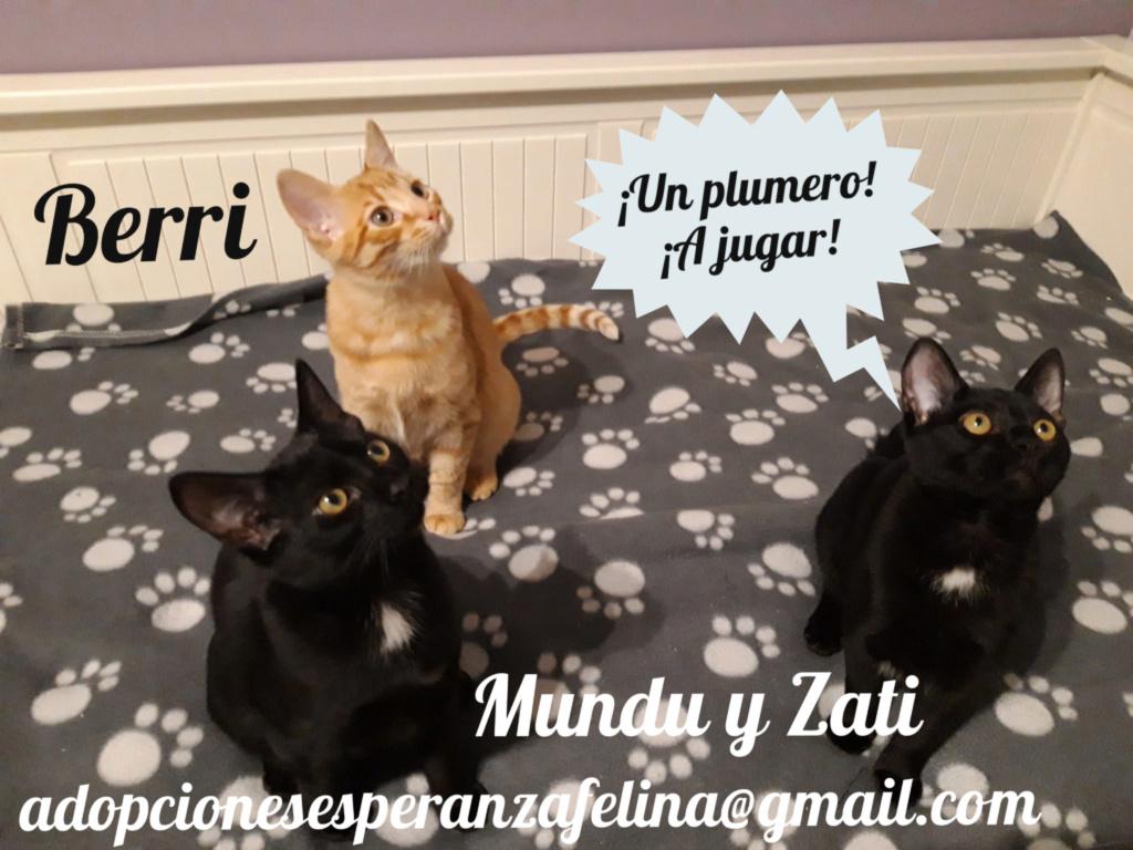 Berri, Zati y Mundu, los cucarachitas (f.nac.aprox.: 27/06/2019. Álava) Pictur58