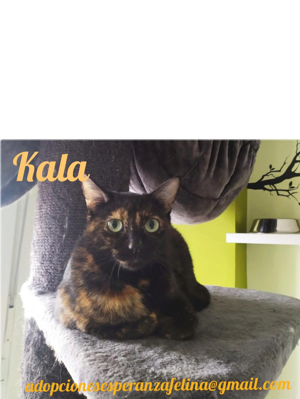 Kala, preciosa carey (Fec. Nac. Aprox. 01/01/2017) Pictur59