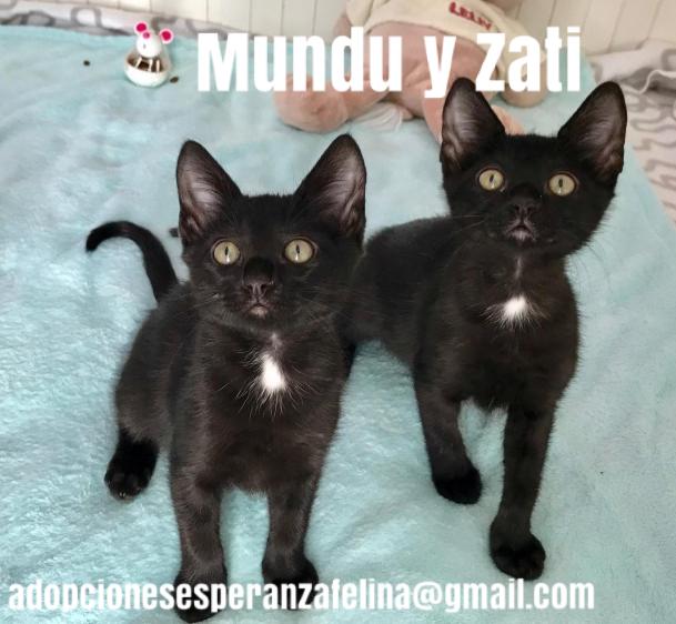 Mundu y Zati en adopción. (f.n aprox 27/06/19) Pictur61