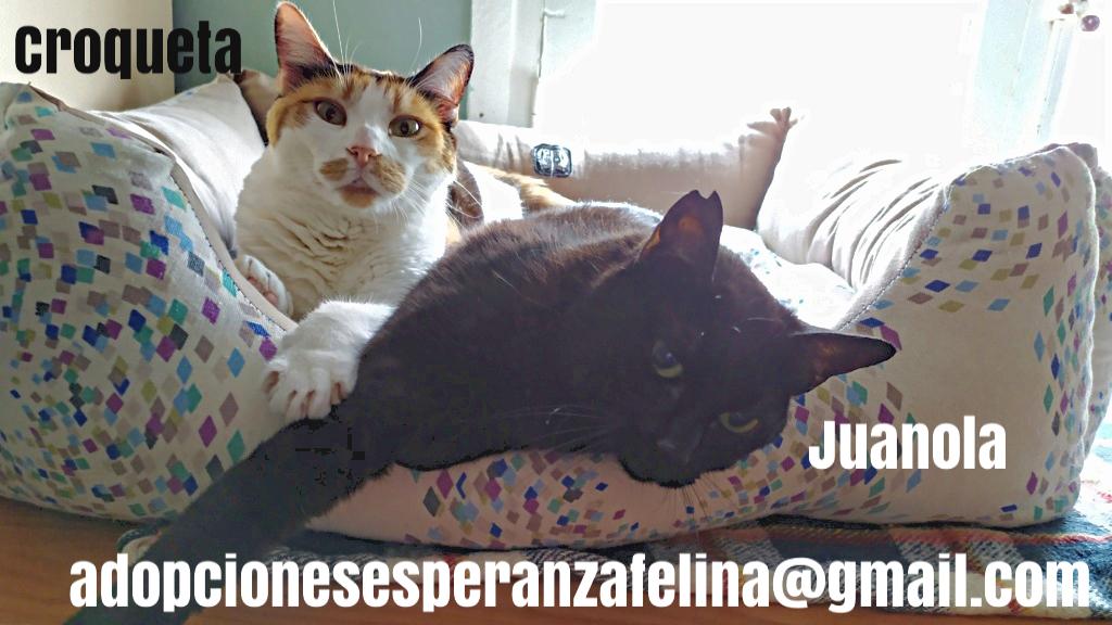 Croqueta y Juanola, preciosas abuelitas buscan hogar. Alava (FN: 02/08/2006; 14/06/2006) Pictur63
