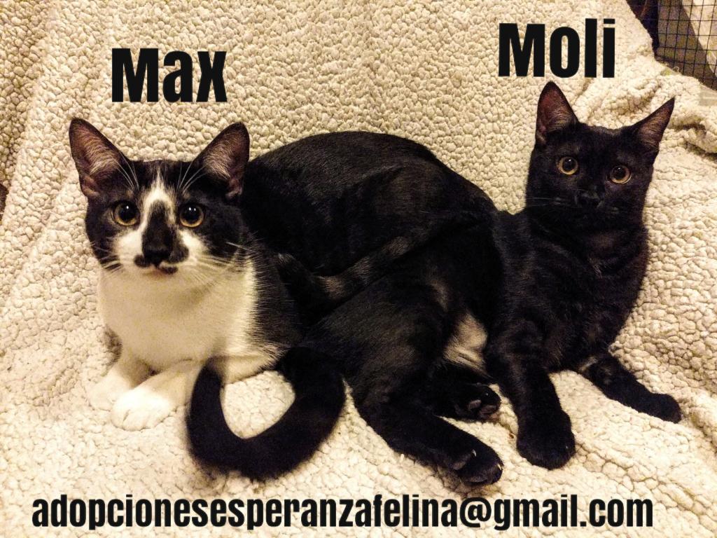 Max y Moli, preciosos hermanitos en adopción (Álava-España f.n.aprox 08/05/19)  Pictur64
