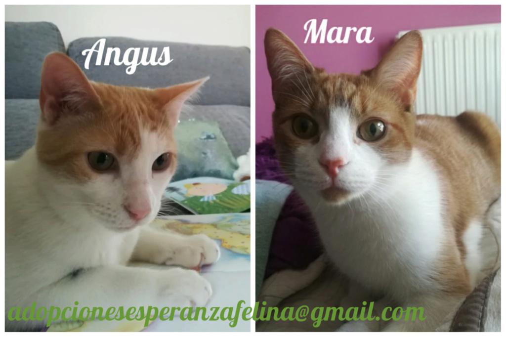 Mara y Angus, hermanitos divertidos buscan familia (Alava-España f.n.aprox 08/04/19) Pictur65