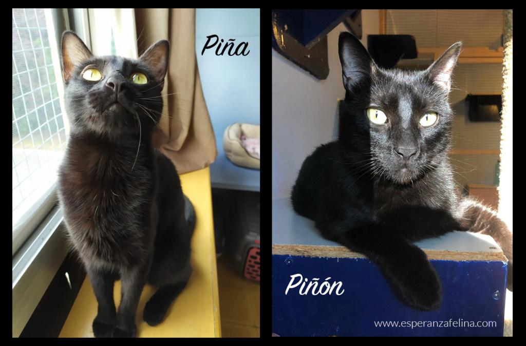 Piña y Piñón, parejita de negruchis en adopción (Alava, Fecha de nacimiento aprox.: 06/09/2017) Pinaa_10