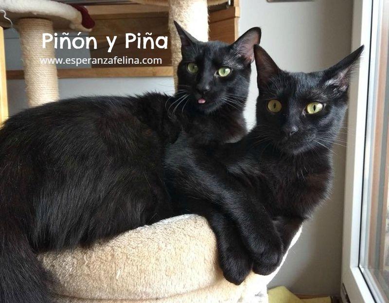 Piña y Piñón, parejita de negruchis en adopción (Alava, Fecha de nacimiento aprox.: 06/09/2017) Pinaon10