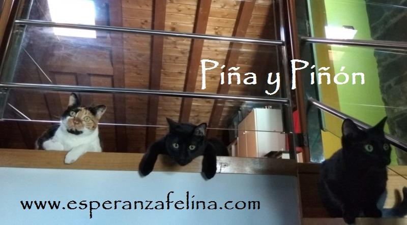 Piña y Piñón, parejita de negruchis en adopción (Alava, Fecha de nacimiento aprox.: 06/09/2017) Piza_y12