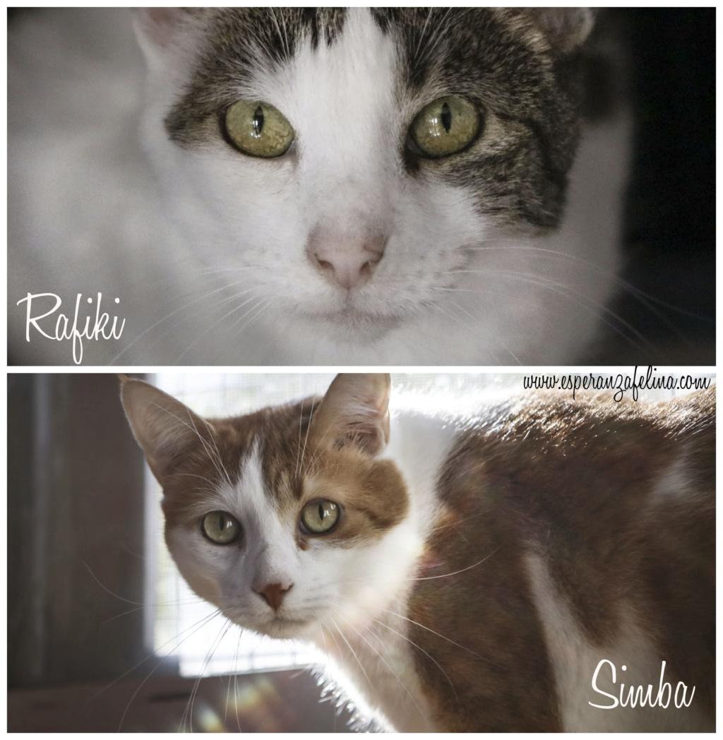 Simba y Rafiki, pareja muy especial en adopción. Alava (FN:15/09/15 ; 15/09/09) Psx_2010