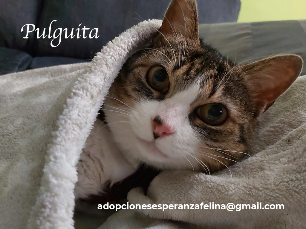 Pulguita, preciosa y mimosa gatita busca hogar. (F.N: 15/05/2012) (Positiva a inmuno + Leucemia) Álava. Pulgui18