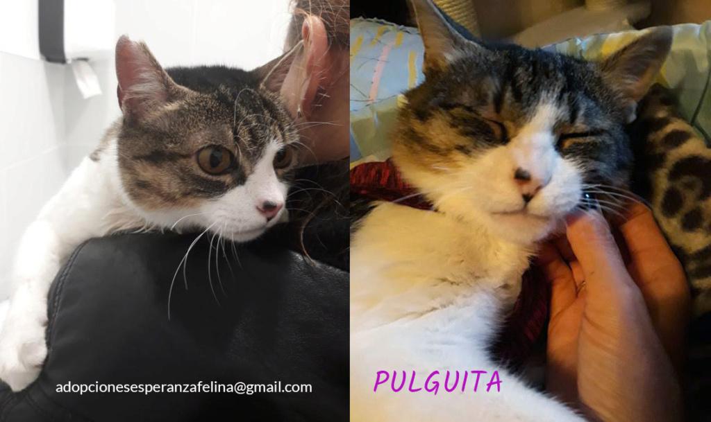 Pulguita, preciosa y mimosa gatita busca hogar. (F.N: 15/05/2012) (Positiva a inmuno + Leucemia) Álava. - Página 2 Pulgui20