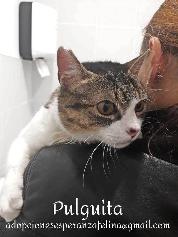 Pulguita, preciosa y mimosa gatita busca hogar. (F.N: 15/05/2012) (Positiva a inmuno + Leucemia) Álava. - Página 2 Pulgui21