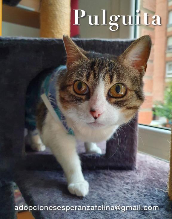 Pulguita, preciosa y mimosa gatita busca hogar. (F.N: 15/05/2012) (Positiva a inmuno + Leucemia) Álava. - Página 2 Pulgui23