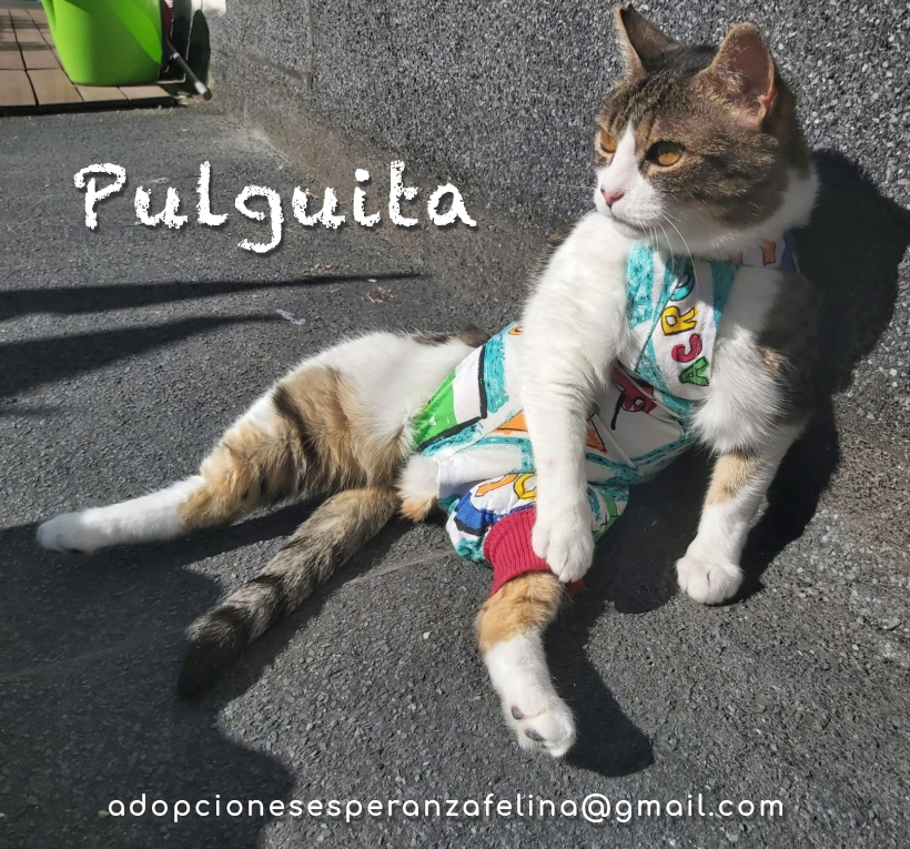 Pulguita, preciosa y mimosa gatita busca hogar. (F.N: 15/05/2012) (Positiva a inmuno + Leucemia) Álava. - Página 2 Pulgui24