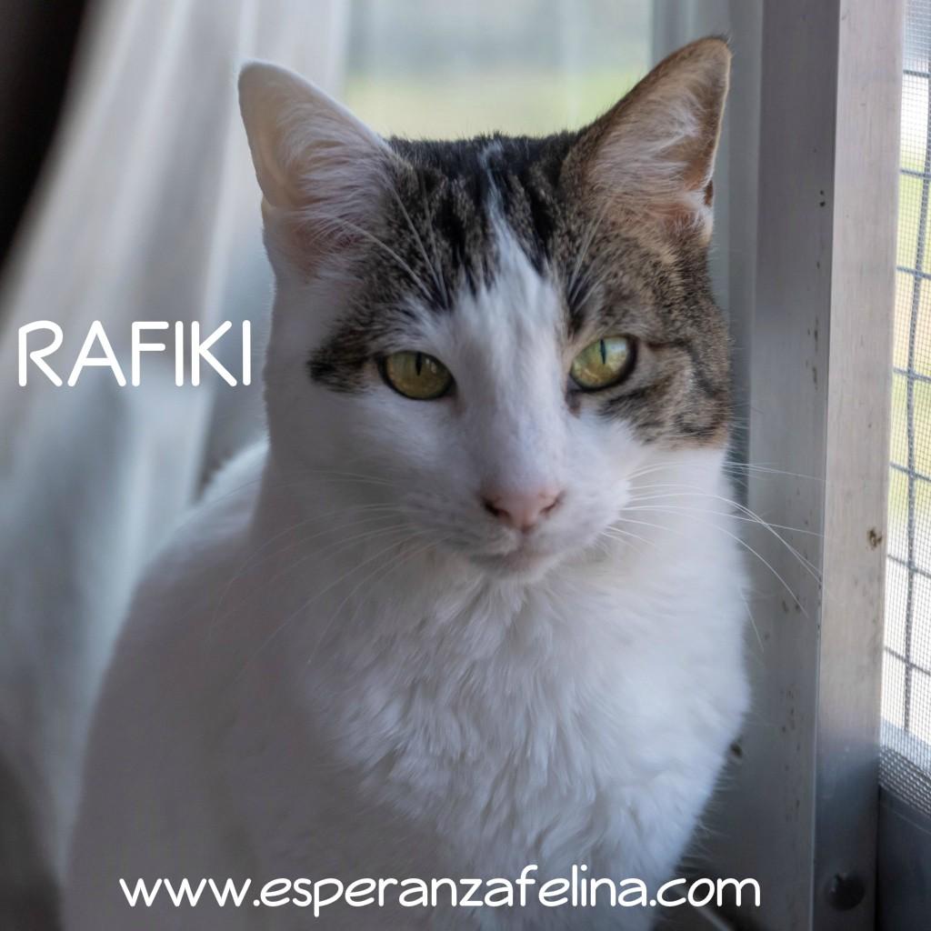 Rafiki. Adulto en adopción ( Álava - España 25.04.07) Rafiki12