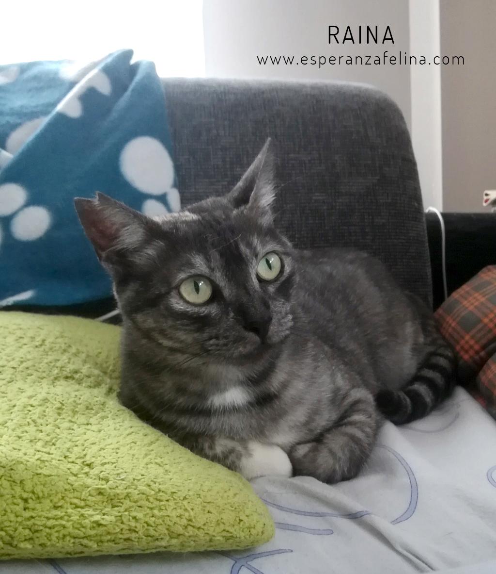 Raina, preciosa gatita busca adopción (F. N. aprox: 25/06/2015) Raina_11