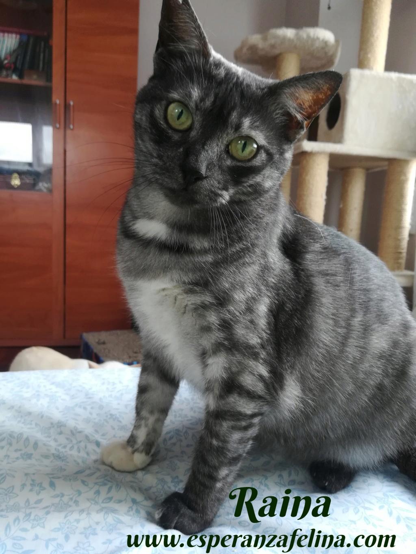 Raina, preciosa gatita busca adopción (F. N. aprox: 25/06/2015) Raina_13
