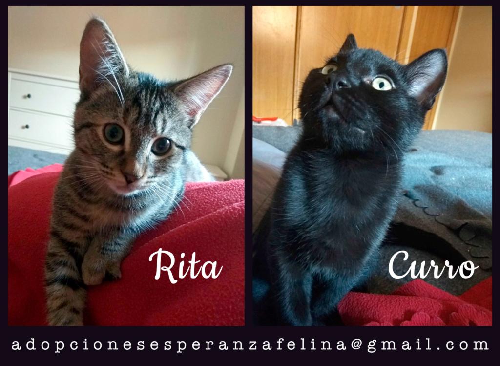 Rita y Curro, cachorritos en adopción. Álava-España (F.N. aprox. 15/07/2020) Rita-y10
