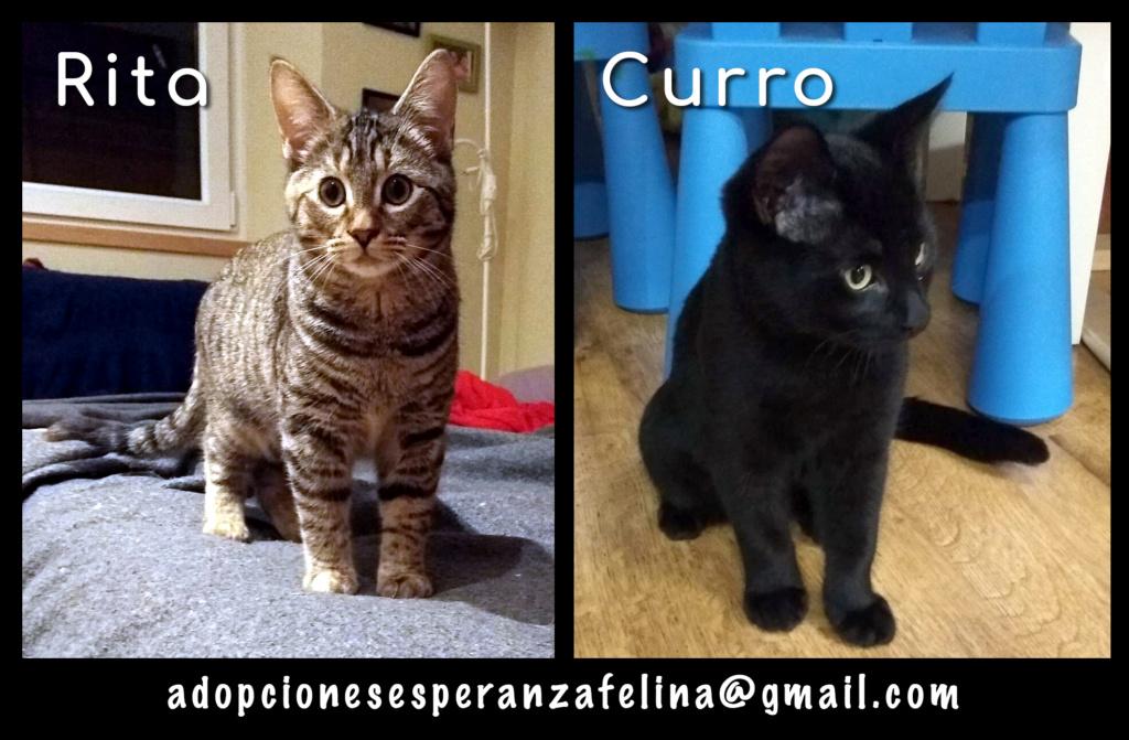 Rita y Curro, cachorritos en adopción. Álava-España (F.N. aprox. 15/07/2020) Rita_y11