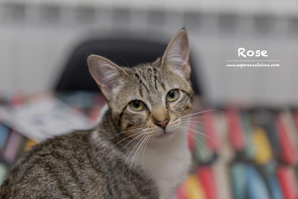 Axl Rose, parejita adorable busca hogar (Alava) (fec. nac. 14/07/2017) Rose10