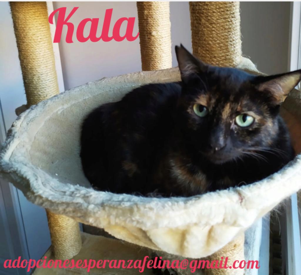 Kala, preciosa carey (Fec. Nac. Aprox. 01/01/2017) Screen11