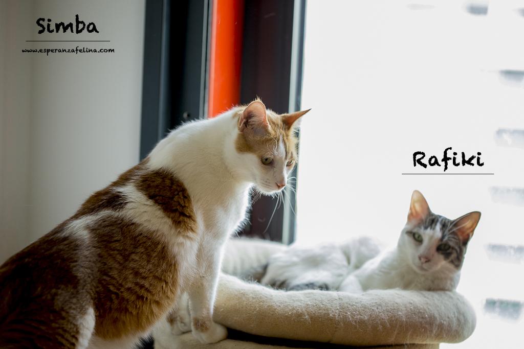 Simba y Rafiki, pareja muy especial en adopción. Alava (FN:15/09/15 ; 15/09/09) Simba_10