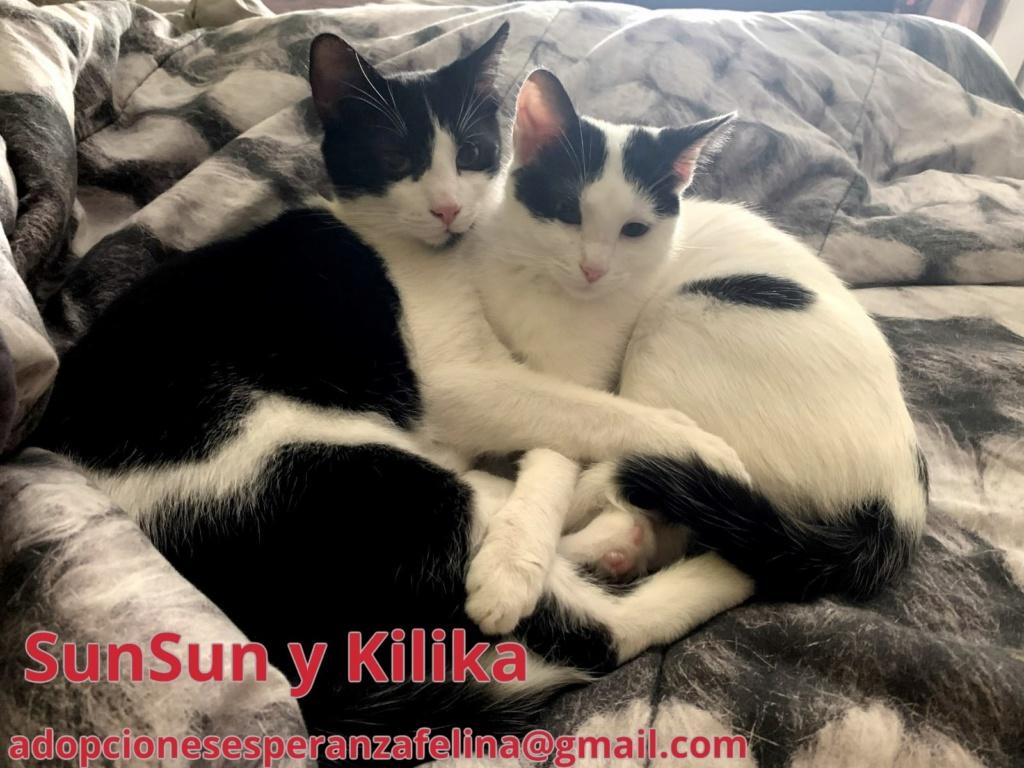 Kilika y SunSun, dos amores en adopción (F. N.13/05/2019 Álava, Esp.)   Sunsun10