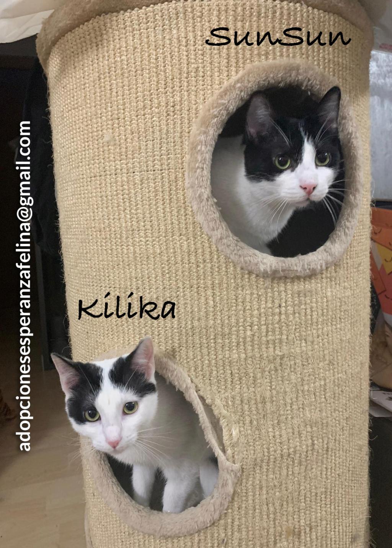Kilika y SunSun, dos amores en adopción (F. N.13/05/2019 Álava, Esp.)   Sunsun11