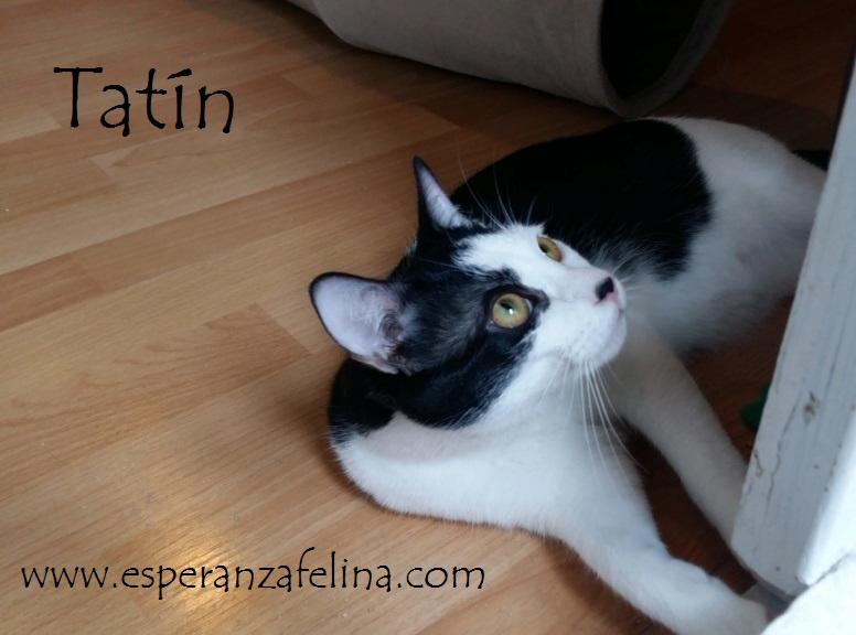 *Muffin y Tatín (Pastelitos). Cachorritos supermimosos buscan familia. Álava (F.N. aprox: 12/05/2018) Tatin_10
