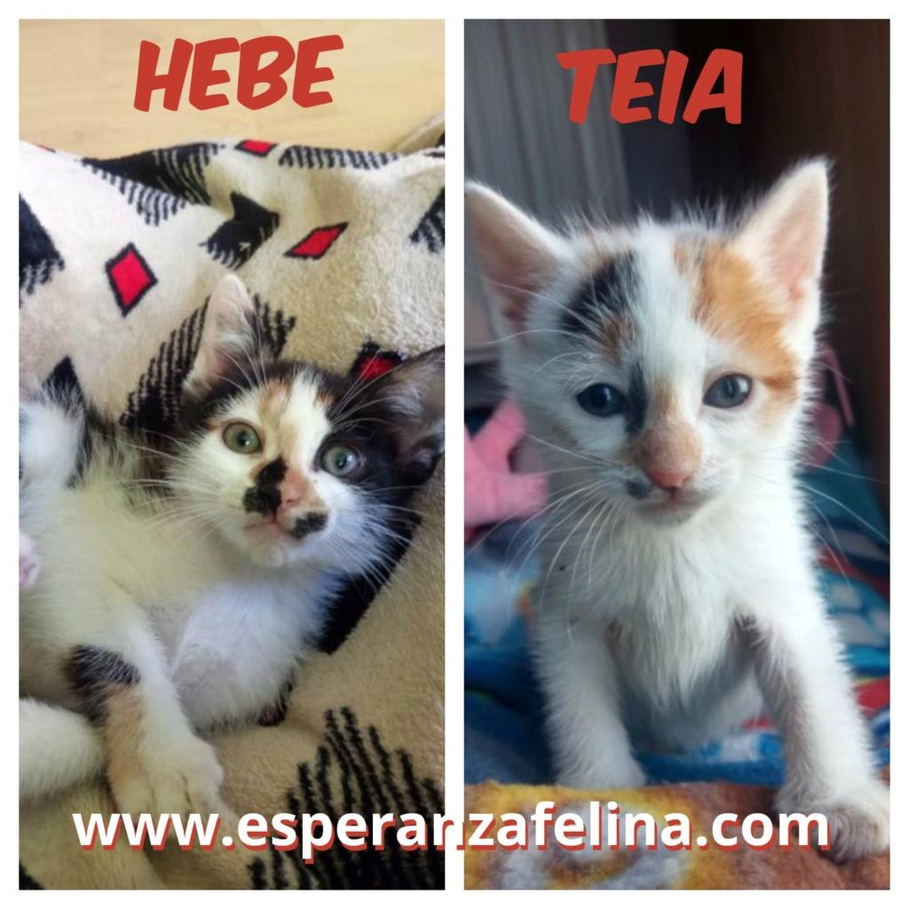 Teia y Hebe ,cachorros en adopción. Álava, España (f.n aprox 16/04/2019) Teia_y10