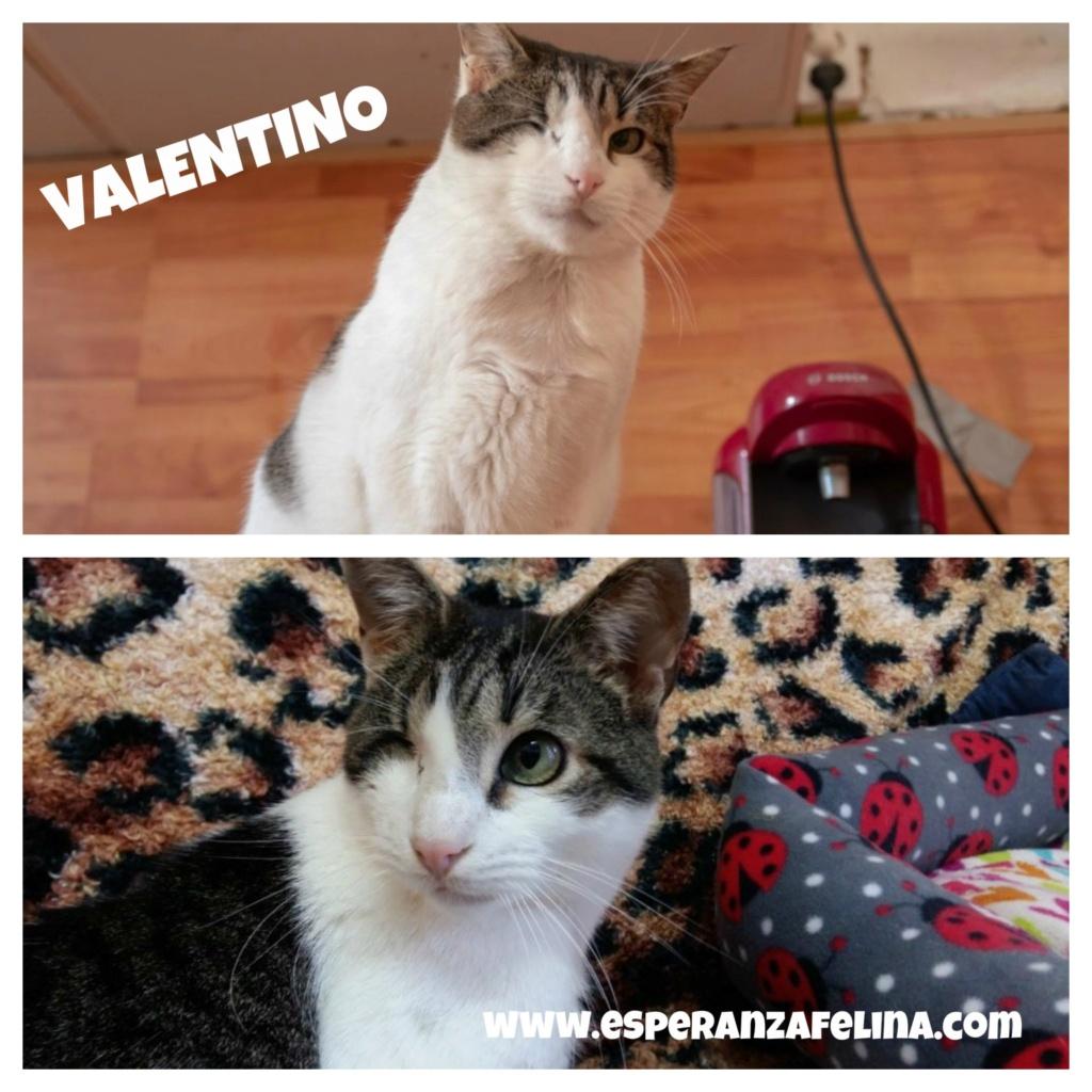 Valentino, gatito muy especial busca hogar. +INMUNO. Álava (F.N aprox. 14/11/2012) Valent10