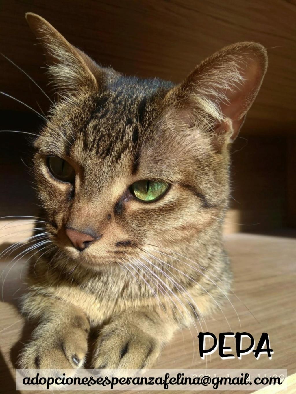 Pepa,preciosa gatita necesita hogar (f.n.aprox 28/04/13) - Página 2 Whats104