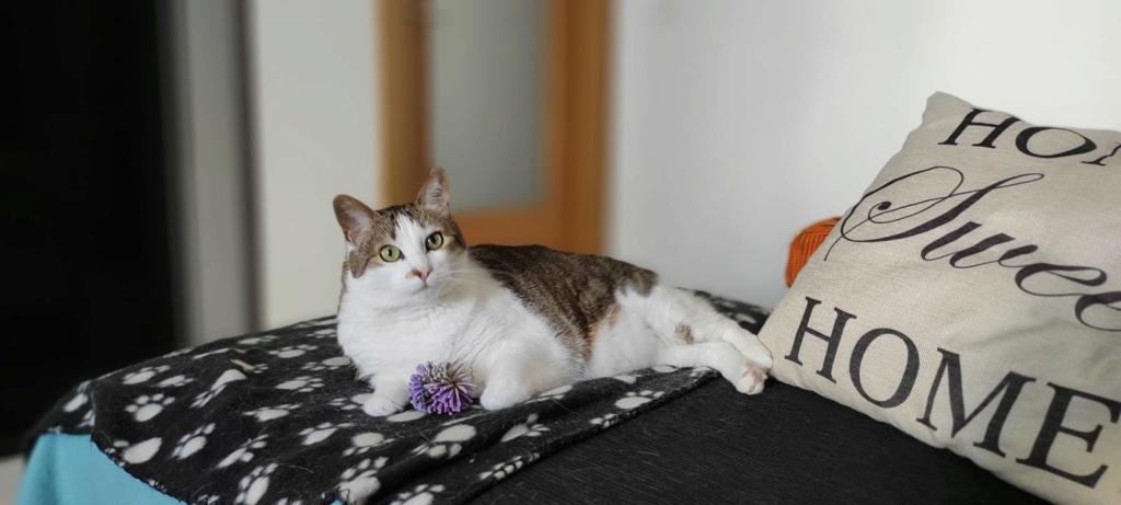 Dina, preciosa gata busca su hogar (Álava, fecha de nacimiento aproximada 10/04/2014 ) - Página 2 Whats110